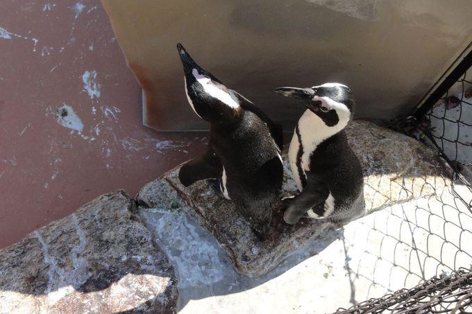 こんな山中にペンギン?ランチタイムでお魚をあげよう!