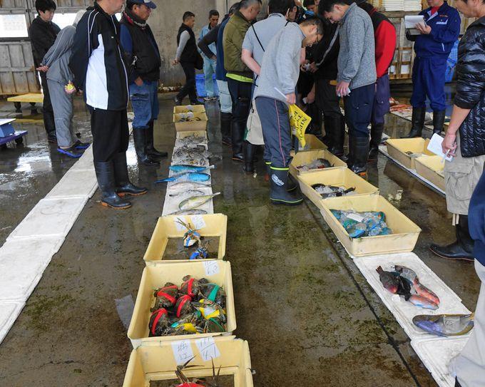 那覇市沿岸漁協で海産物のせりを体験!