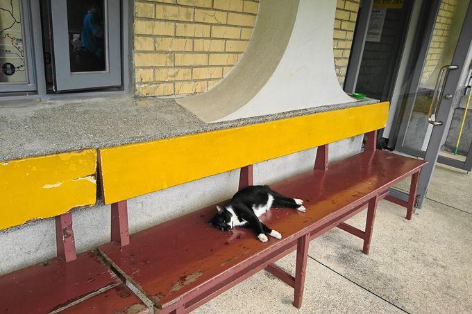 猴硐(ホウトン)駅を降りるなり猫ちゃんが!