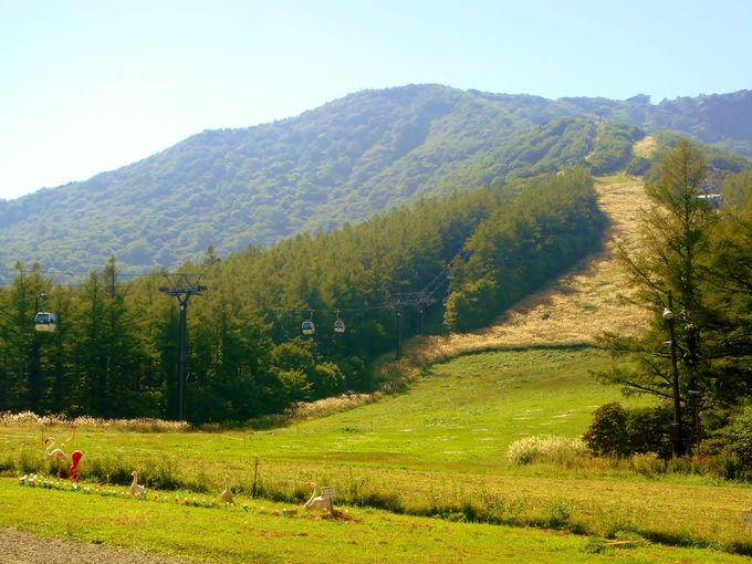 山の斜面に輝く一面の美しいススキの道!!