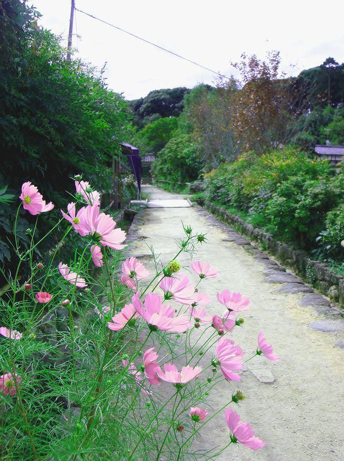 極楽浄土への道