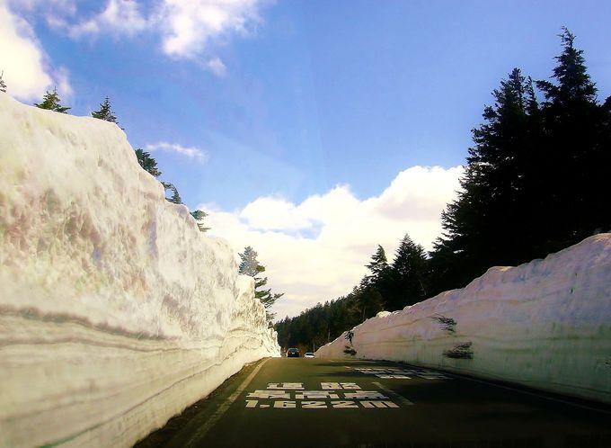 短期間しか見られない絶景『雪の回廊』!