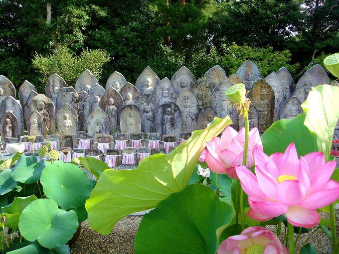 まさに仏様の世界。石仏と蓮の幽玄美!