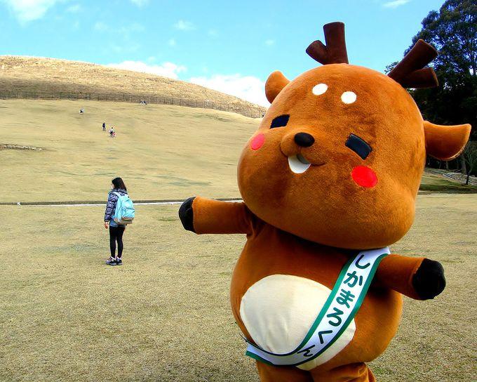 現在、奈良市内で存在感を発揮中!超癒し系のしかまろくん!