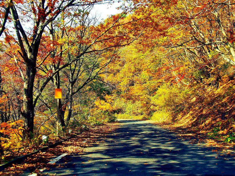 【必読】絶景ドライブを秋晴れの日におススメする真の理由。正体は・・・酷道。