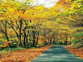 地元人しか知らない秘密の紅葉トンネル!国道399号線で福島〜山形へ絶景ドライブ