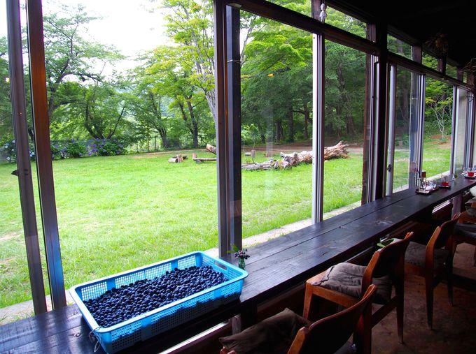 窓も虫も関係ない!目の前に広がる大自然空間&自家農園の野菜や果物を使ったメニュー