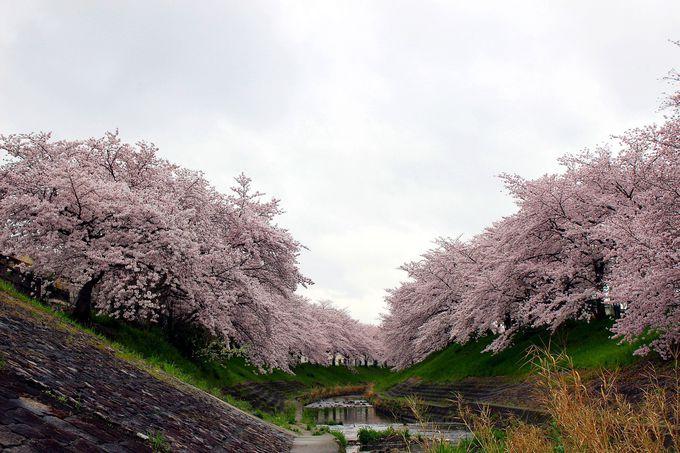 奈良のクラフト作家やクリエイターが集まる桜の名所・佐保川周辺