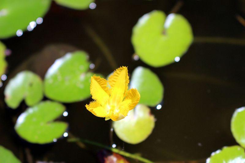 幻の万葉花「あざさ」を求めて!奈良県磯城郡三宅町の太子道歴史ウォーク