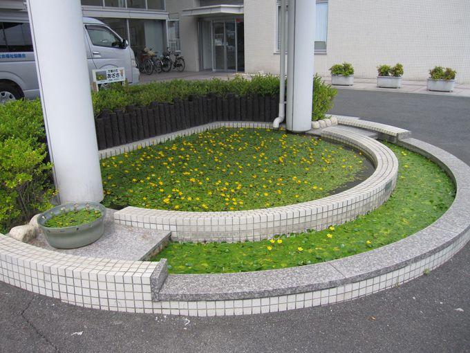 日本で二番目に小さい町「三宅町」!散策のスタートは「あざさ苑」から