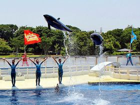 めっちゃ楽しい!京都水族館「ラ・ラ・フィンサーカス」の劇場型イルカパフォーマンス