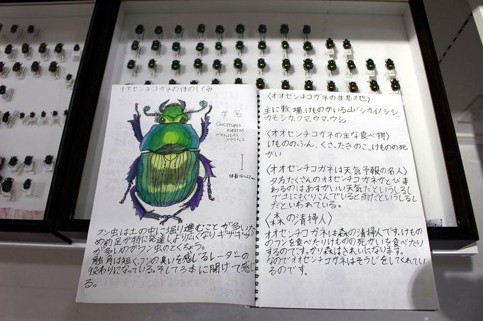 奥深い糞虫の世界、未来のフン虫王子の壮大な作品にもご注目を!