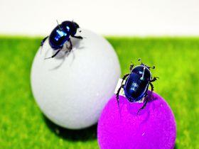 キラキラ宝石の煌めき!日本一の糞虫の聖地・奈良「ならまち糞虫館」