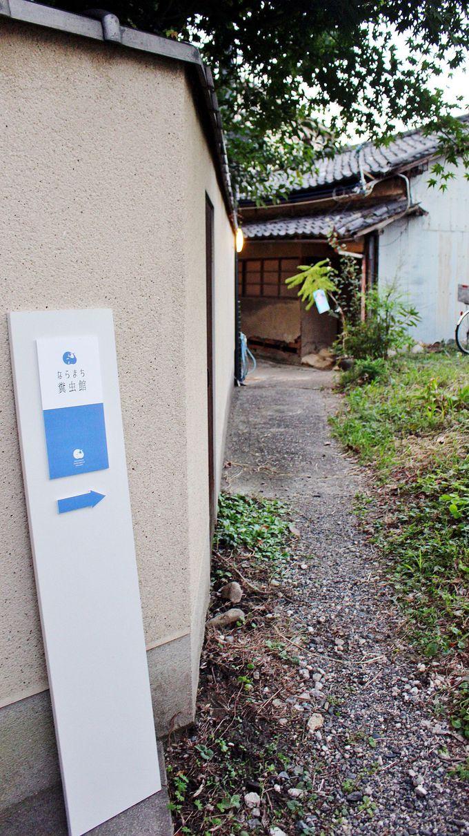 奈良公園が日本一の糞虫の聖地って知ってる?