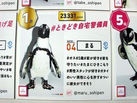 話題の京都水族館!会いに行けるペンギンアイドルのセンターは元自宅警備員