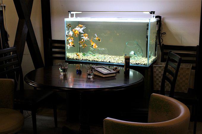 どのシートにする?おひとり様でも楽しめる金魚水槽のシート