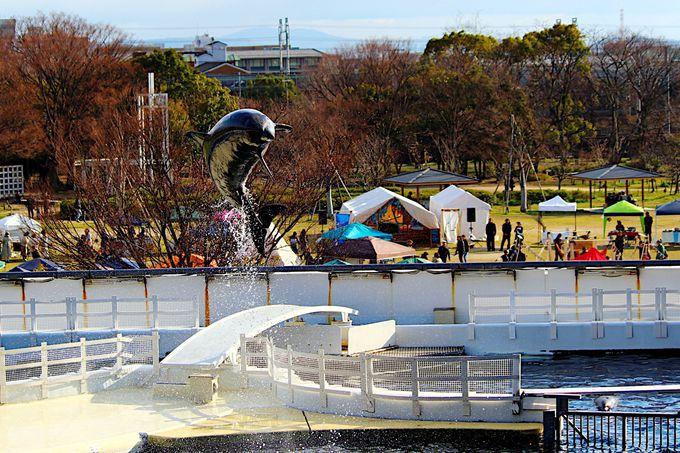 「京都水族館の無観客イルカショー」がTwitterのトレンドワード入り!