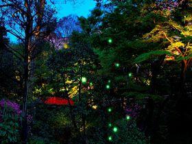 """「ホテル椿山荘東京」の幻想的な庭園で""""ほたるの夕べ""""を楽しもう!"""