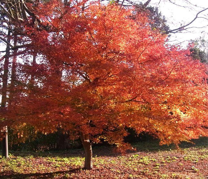 紅葉の庭を散歩する、ゆっくりと流れる時間