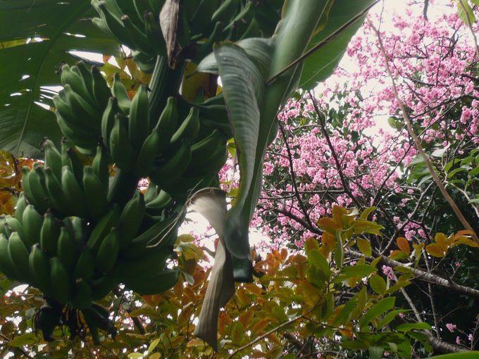 スポット1:花や果実がたわわに実る「壺屋ガーデンハウス」