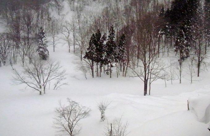 5mの積雪の上で見る神秘的な森の中は発見の連続!