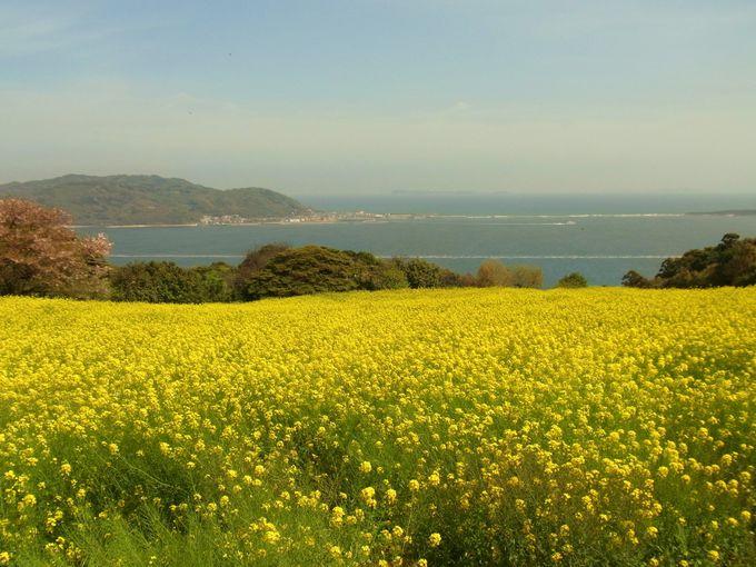 海まで続く菜の花畑「福岡・能古島」