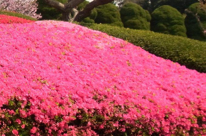 初夏まで咲く花も!スキップしたくなる花の小径