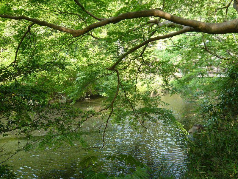 京の新緑・苔・青もみじを愛でに、静寂なる大原と瑠璃の庭へ