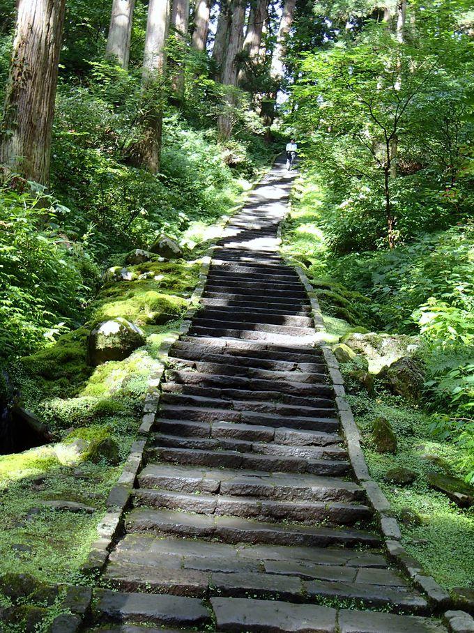 一の坂・杉並木