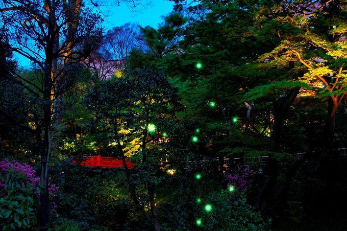 「ホテル椿山荘東京」の夜の庭園、蛍が多く見られるのは!?