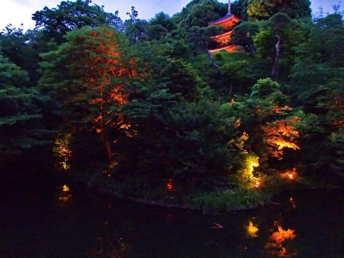 「ホテル椿山荘東京」夜の庭園もみどころがたっぷり!