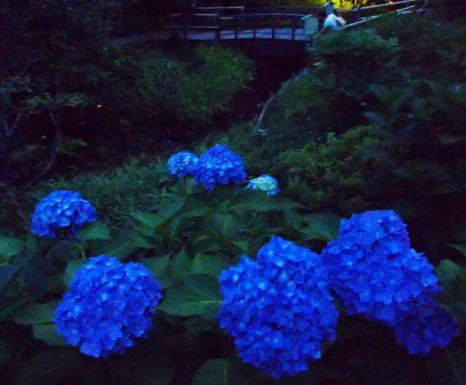 食事の前と後、どちらの時間も蛍や季節を楽しめるホテル庭園