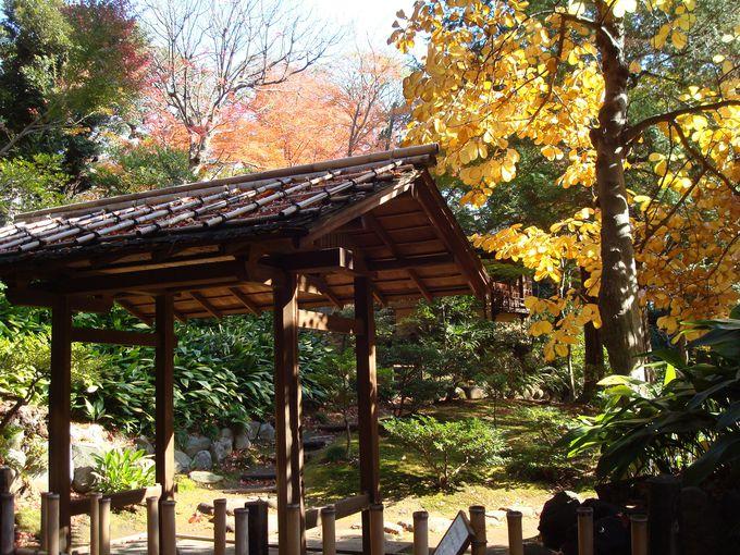 日本庭園と昔の馬車道