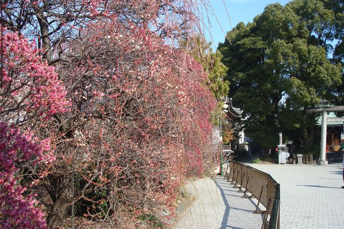 「香取神社・香梅園」は穴場的名所
