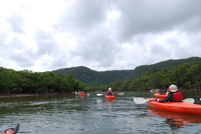 【楽しみ方1】遊覧船やカヌーでマングローブクルーズ