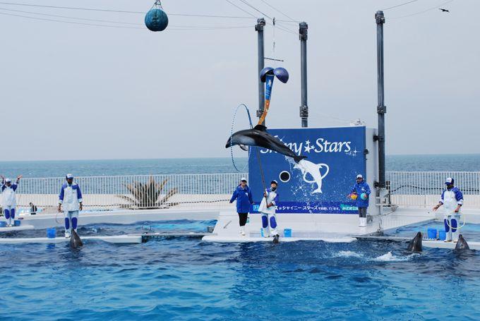 初めてのイルカに大満足♪大阪湾を見ながらイルカショー