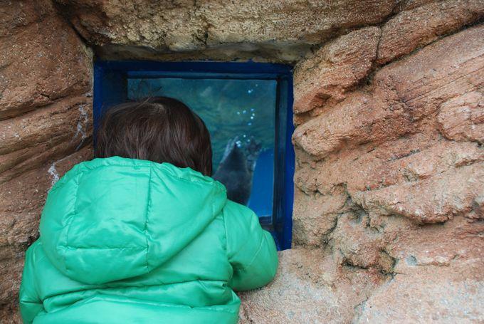 抱っこは不要!ペンギンさんは、子ども目線でものぞけちゃう。