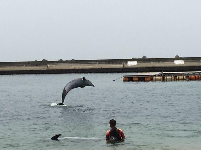 ビーチで泳いでイルカも見れる♪須磨海岸へ