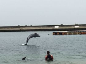 須磨ビーチでイルカが見られる!?関西でも人気の海水浴場は泳ぐだけじゃない!