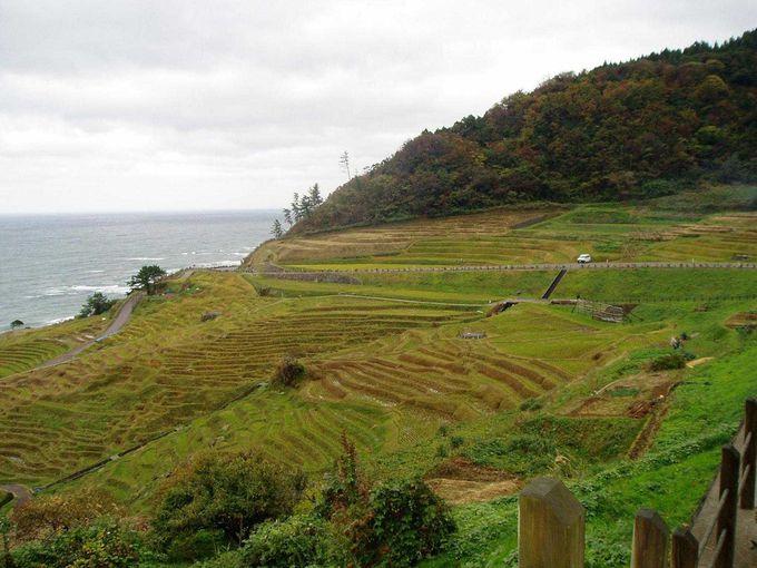 稲刈り後の白米千枚田