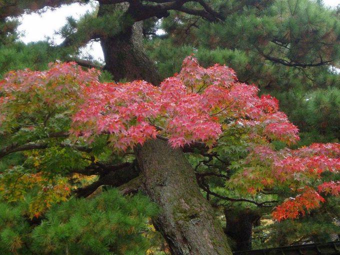 紅葉も見ごろです