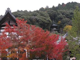 京都とっておきの紅葉 永観堂