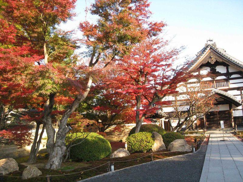 朝の高台寺参観
