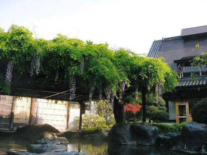 7.猿ヶ京温泉