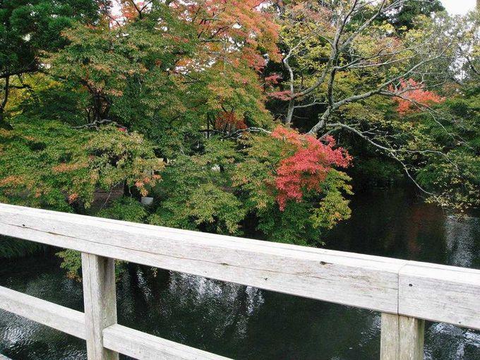 日本の秋を感じて