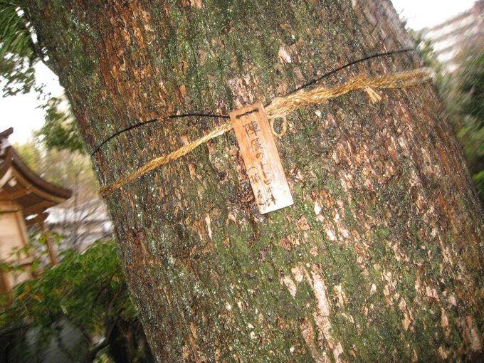 庭園の中で、トトロの木を発見!
