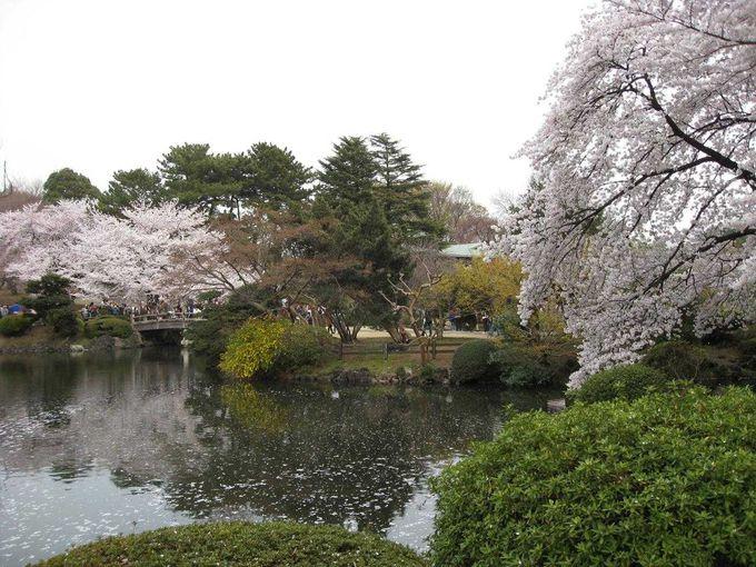 春は、桜がお出迎え