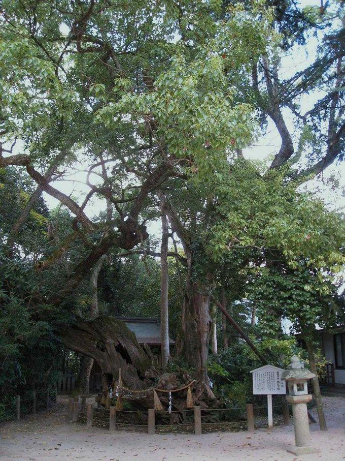樹齢3000年の雨乞いの楠