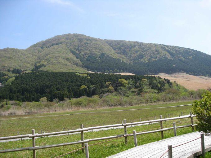 仙石原すすき草原もすぐそこ