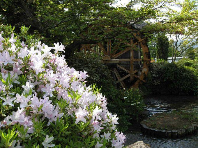 四季折々楽しめる庭園散歩